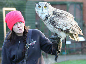 Colin the Owl at Thorp Perrow