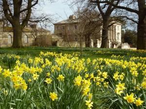 Daffodils at Constable Burton Hall